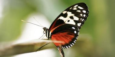 Leptir sjedi na grani